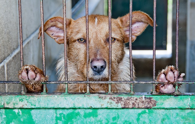 Don't send your dog to kennels in Morecambe! be, instead of leaving your dog in kennels!