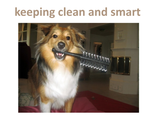 Even luxury boarding kennels don't offer to groom your dog daily! Gail will keep your dog clean, smart, happy and healthy.