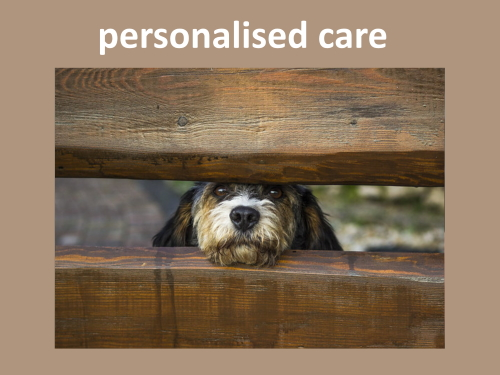 When you keep a dog overnight in home boarding, personalised care is very important